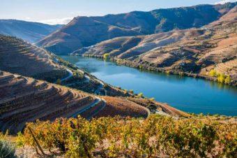 Ozono pode danificar vinhas do Douro